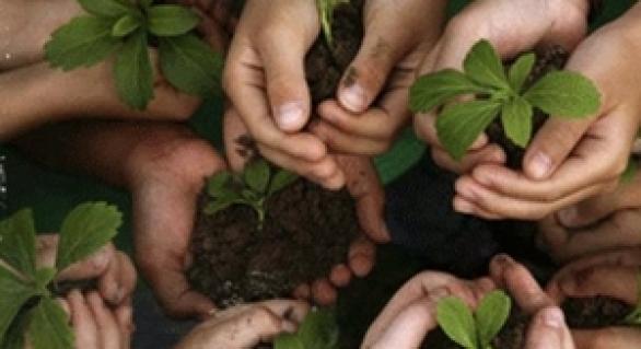Disposizioni in materia di agricoltura sociale