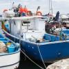 Settore ittico: interventi e deleghe al Governo